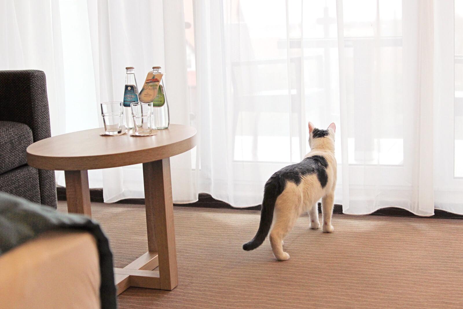 Hotel w którym akceptowane są koty