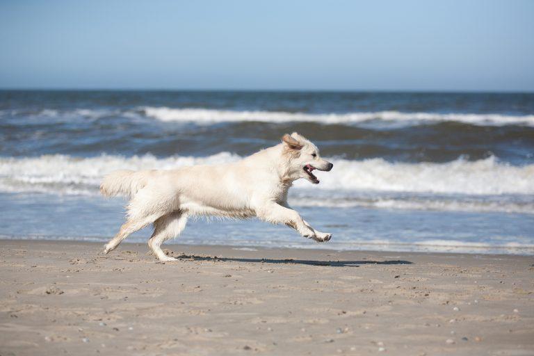 Pies nad morzem hotel przyjazny zwierzętom