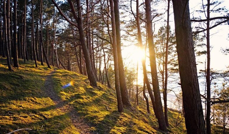 Polski cud natury